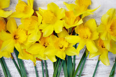 Bouquet of fresh spring narcissus flowers on white wooden backgr Stock Photography
