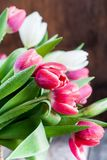 Bouquet of fresh Spring Tulip with Drops Royalty Free Stock Image