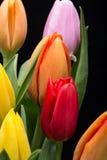 bouquet of fresh spring tulip flowers Stock Photos