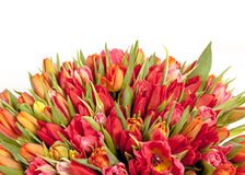 Bouquet of fresh spring tulip flowers Stock Photography