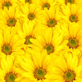 Bouquet of Fresh Spring Yellow Flowers Royalty Free Stock Photo