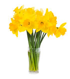 Bouquet of fresh spring yellow narcissus isolated over white Stock Photo