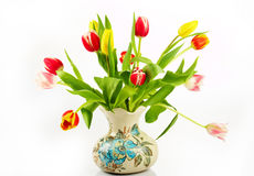 Bouquet of the fresh tulips Stock Image