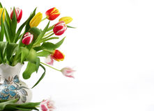 Bouquet of the fresh tulips Royalty Free Stock Image