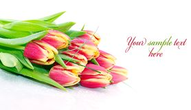 Bouquet of fresh tulips Royalty Free Stock Photography