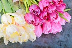 Bouquet of fresh tulips Stock Photo
