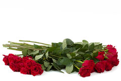 Bouquet of fresh valentine red roses isolated Royalty Free Stock Photography