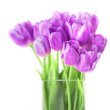 Bouquet of fresh violet tulips on white background Royalty Free Stock Photo