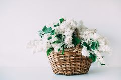 Bouquet of fresh white lilac flowers in wicker basket on wooden Stock Photos