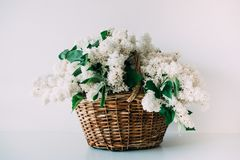 Bouquet of fresh white lilac flowers in wicker basket on wooden Royalty Free Stock Photography
