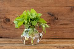 Bouquet of fresh wild mint in glass jar on wooden background Royalty Free Stock Photos
