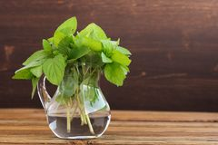 Bouquet of fresh wild mint in glass jar on wooden background Stock Photography