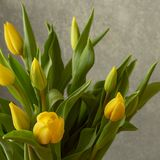 Bouquet of fresh yellow tulips stock photography