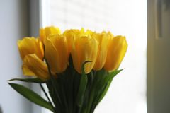 A bouquet of fresh yellow tulips in a vase Stock Photo