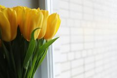 A bouquet of fresh yellow tulips in a vase Royalty Free Stock Images