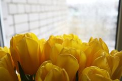 A bouquet of fresh yellow tulips in a vase Royalty Free Stock Photos