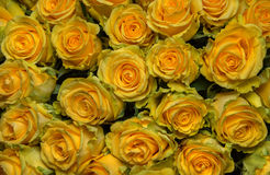 Bouquet of freshly cut large yellow roses Stock Photo