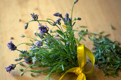 Bouquet of freshly cut lavender Stock Image