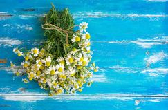 Bouquet of Freshly Picked Camomile Flowers Tied with Twine on Aged Plank Wood Blue Background. Beauty Skin Care Healthy Infusions. Tea Detox Concept. Process of Stock Images