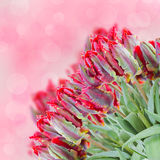 Spring red tulips bouquet Royalty Free Stock Photography