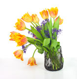 Bouquet of fringed tulips Royalty Free Stock Photo