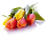 Bouquet From Yellow And Red Tulips. Royalty Free Stock Photo