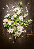 Bouquet of fruits trees blooming on dark rustic background Royalty Free Stock Image