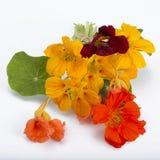 Bouquet of garden nasturtium Stock Photography