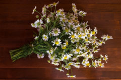 Bouquet of Garden Small Camomiles Royalty Free Stock Photo