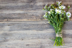 Bouquet of Garden Small Camomiles Royalty Free Stock Images