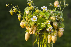Bouquet garden yellow strawberry with leaves, flowers stock photography