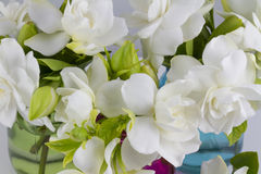 Bouquet of Gardenias royalty free stock photos