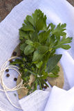 Bouquet Garni. Of fresh herbs and peppercorns, on muslin ready for tying Royalty Free Stock Photos