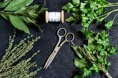 Bunch of fresh aromatic herbs - bouquet garni. Bouquet garni. Classical french composition. Bay leaf, parsley and thyme, bound with culinary thread. Bunch of Royalty Free Stock Image