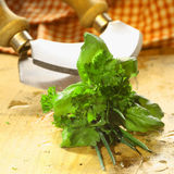Bouquet garni of fresh herbs Stock Photography