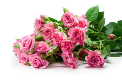 Bouquet from gentle pink color of roses Royalty Free Stock Photography