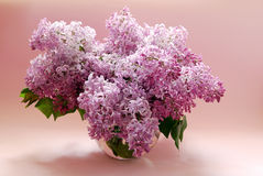 Bouquet of a gentle spring lilac flowers on a pink background Stock Image