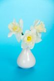 Bouquet of gentle, spring, white narcissuses Stock Photos
