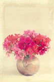 Bouquet of the geranium Stock Photos