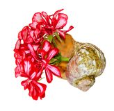 Bouquet of geranium flower and leaves in an old shabby shell is royalty free stock photography