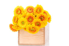 Bouquet of gerber flowers in the box Stock Image