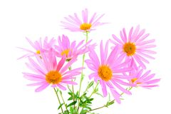 Bouquet of gerbera daisies Royalty Free Stock Photos