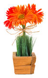 Bouquet of gerbera daisy Stock Image