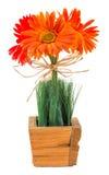 Bouquet of gerbera daisy Stock Image