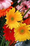 Bouquet of gerbera Stock Photo