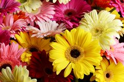 Bouquet  gerbera flower Stock Images