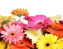 Bouquet  gerbera flower Royalty Free Stock Image