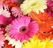 Bouquet  gerbera flower Stock Photography