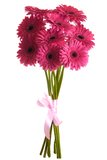 Bouquet of Gerbera flowers. In white background Stock Photos