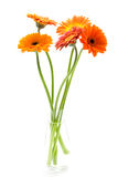 Bouquet of Gerbera flowers Royalty Free Stock Images